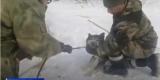 Пса с капканом на ноге спасли сотрудники «К-9» в Иркутске