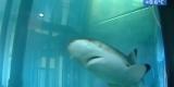 Иркутский «Дом природы» приютил рифовую акулу и других редких рыб