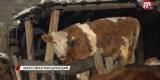 В Улан-Удэ введен режим повышенной готовности из-за бешенства животных