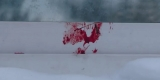 В Ангарске неизвестные жестоко убили домашнего кота