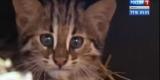 Дальневосточные лесные коты поселились в иркутском зоопарке