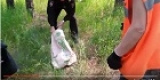 Ангарск: полицейский поймал сбежавшую от хозяина обезьяну-капуцина