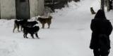 Бездомных собак отправят в Иркутск на самолете