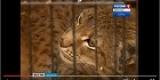 Иркутск: ветеринары спасают покалеченную