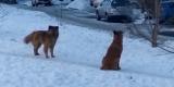 Бродячие собаки снова напали на ребенка в Иркутске