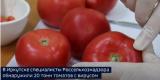 В Иркутске выявили 20 тонн зараженных вирусом помидоров